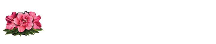 Azalea Capital Retina Logo